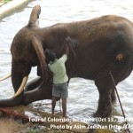 SriLanka tour - Elephant after a bath