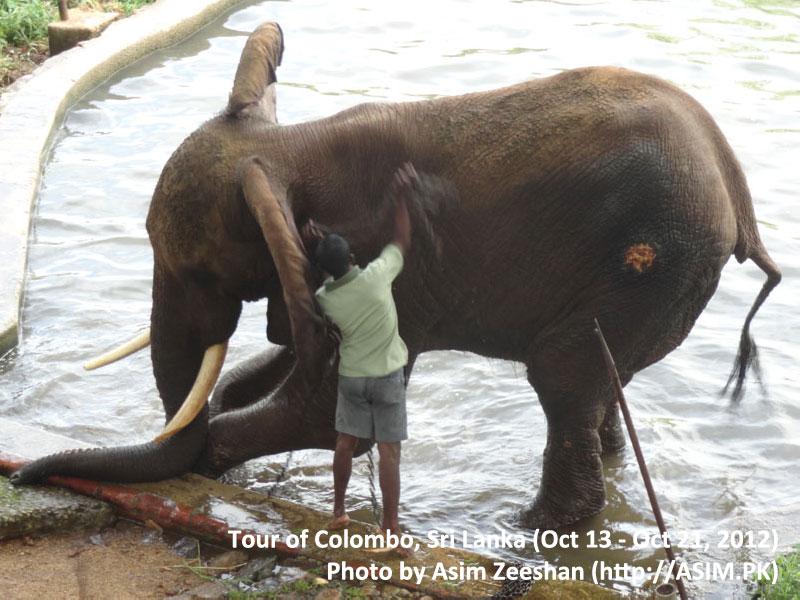 SriLanka tour - Elephant after a bath